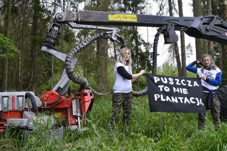 La dernière forêt primaire d'Europe en danger